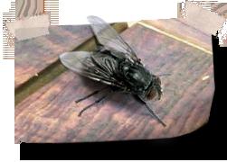 Last van vliegen rond het terras alle huis en for Vliegen in de tuin
